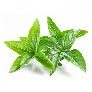 Thai basil leave